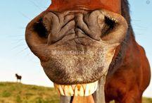 Horse funnies