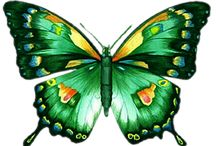 Papillons et insectes