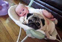 Cuddly Pets