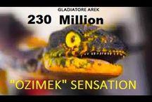OLDEST DINOSAUR FOUND in Poland ( OZIMEK ) 230 MILLION YEARS AGO