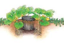 Sổ tay chăm cây / Ghi lại các cách chăm sóc cây