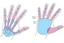 tekenen/anatomie