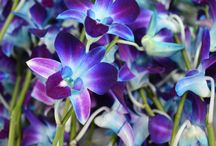 Orchids glossary, learn more about those beautiful flowers
