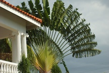 Self Catering Vacation Rental Villa accommodation in Montego Bay Jamaica / Book cheap self catering holiday home vacation rental villa in Montego bay Jamaica.