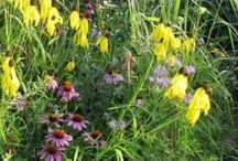 Dry Soil Native Seed Mixes