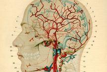Biology/Science/Medicine / by Lisa Linbrugger