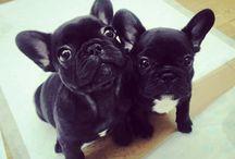 Kutyák!! <3