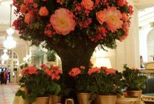 Flowers / An album showcasing the floral displays around the hotel