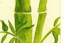 imagens bamboo