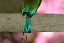 Birds Of A Feather... / by Dusty Lann