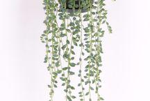 Plants // home