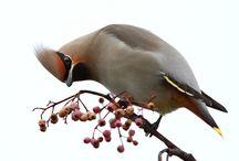 Birds I've Seen / by Cory Glauner