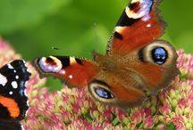 Butterflies found in Roman Road