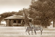 African Safari Lodges / Best of the safari lodges in Kenya, Botswana, Tanzania and South Africa / by Visual Itineraries