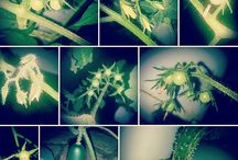 Tower Garden By Juice Plus / Grow Your Own...Tower to Table...Farm to Table.......