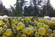 Harvest 2013 / Harvest 2013