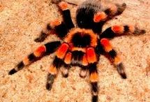I Love Spiders! / Tarantulas, other spiders, webs and enclosures