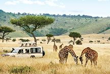 Safari Vacations / Get up close and personal with the most beautiful animals on the planet on a safari vacation. Not just for Africa, safaris can be found on all continents, from lions to polar bears.
