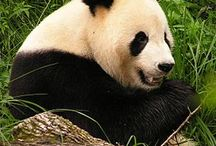 Endangered species - fauna and flora / Don`t kill the world awareness. -