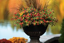 Fall Container Gardens / Gardening doesn't have to stop when the weather cools off! Now's the time to create container gardens with autumn-toned varieties that can shake off cool nights. Brighten up your front door for kids who are off to school, or ready to trick-or-treat at your doorstep.  / by Proven Winners Plants