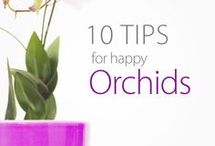 orchids / orhidee