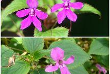 kwiaty owado-zwierzo-człekopodobne