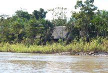 Pacaya Samiria, jungle in Peru / The jungle