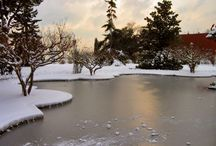Ponds & Water Gardens in Winter / fish ponds and water gardens in the winter