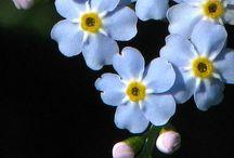 """INFLORESCENTE / """"Dacă florile şi-ar dărui oameni la fel cum oamenii îşi oferă flori, de unde ar fi tăiaţi oamenii?""""   NICHITA STANESCU"""