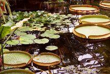 flora n gardens
