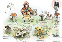 4lk ympäristöoppi