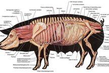 Anatomi / Emner og bilder innen anatomi; planter og dyr.