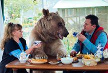 Bears!!! / awwwwwwww