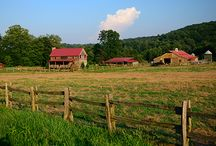 Acreage Landscape / acreage landscape