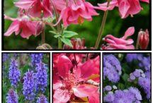 www.spokojnydom.blogspot.com / ogród, dom, life, slowlife, green, taras, warzywnik, eco, rozsada, sadzonki, nasiona,