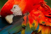 fauna e flora Amazônica