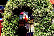 Arched door / A arched door of cafe in Watson bay sydney