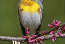 Nature and Bird Books Worth Reading - / Books about birds, wildlife, nature and outdoor adventures.