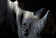 RHINO / Rhino
