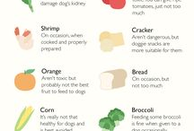 Dogs / #dog #dogs #food #foodfordogs #canmydogeatthis