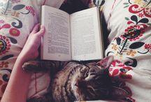 Cats ❤