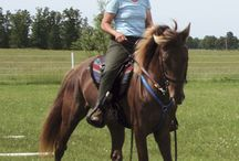 Gaited Horses Training