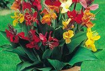 fleurs en plus