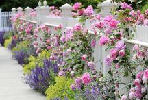 Garden:  Fence