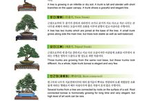 Bonsai(분재)