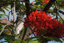 Pajareo boricua: Las aves de Puerto Rico / Fotos de aves de la isla de Puerto Rico captadas por el lente de Mi Puerto Rico Verde (www.miprv.com).  / by MiPuertoRicoVerde.com