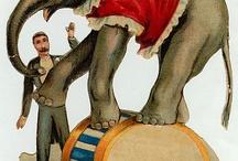 старый цирк