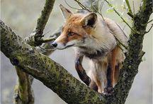 It's a wild-life / by Heather Sorensen