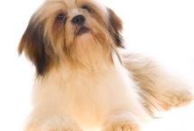 I love my dog / Rocky! / by Jacqui Rago