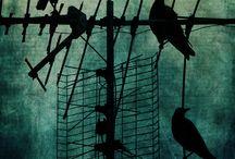 Samples of crows